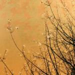 Spring 2018: Meditation, Brain and Body - PSYC 3559- 004